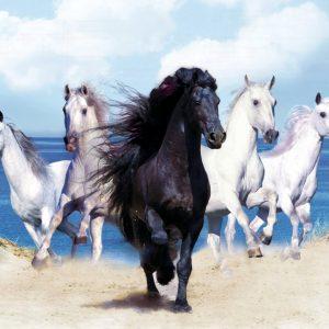 caballos-negros-y-blancos