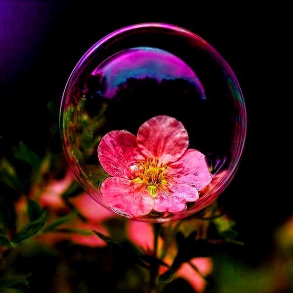 fotos-de-flores-hermosas